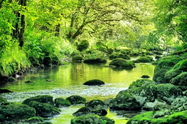 Cascade et forêt de la Charabotte, ain